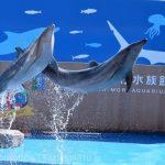 仙台うみの杜水族館、バンドウイルカのイルカショー https://t.co/Lq3Cz2rAoz