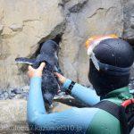 仙台うみの杜水族館、フェアリーペンギン https://t.co/D39cBVSJmK