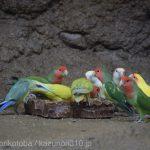 仙台うみの杜水族館、インコさん https://t.co/t0qs6bp2gp