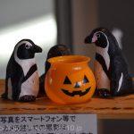 仙台うみの杜水族館 https://t.co/rS3pBGPSTt
