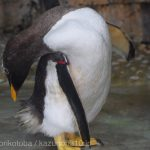 仙台うみの杜水族館、ペンギンさん https://t.co/wIG08OiP4y
