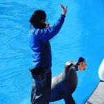 #カリフォルニアアシカ #仙台うみの杜水族館 #nikonD5300 #正月