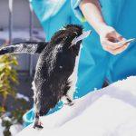 #ペンギン #仙台うみの杜水族館 #nikonD5300 ご飯目指して
