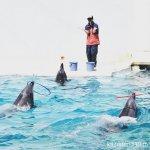 #バンドウイルカ #イルカショー #須磨海浜水族園 #nikonD5300 フラフープを回すバンドウイルカさん