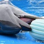 #バンドウイルカ #仙台うみの杜水族館 #nikonD5300 努力すれば届かない所にも届く