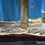 #仙台うみの杜水族館 #nikonD5300