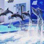 バンドウイルカ #イルカショー #仙台うみの杜水族館 #nikonD5300
