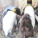 #オウサマペンギン#仙台うみの杜水族館 #nikonD5300 2018/10