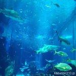 #大水槽 #マリンワールド海の中道 #iPhone7Plus 横からも見られます