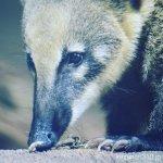 #アカハナグマ #仙台うみの杜水族館 #nikonD5300 爪が鋭いなー