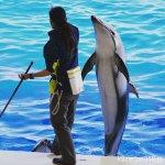 #カマイルカ #マリンワールド海の中道 #nikonD5300