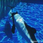 先週スマホで撮影 #イロワケイルカ #仙台うみの杜水族館 #iPhone7Plus