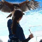 #ハリスフォーク #仙台うみの杜水族館 #nikonD5300