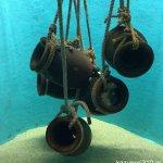 #たこつぼ #宮島水族館 #iPhone7Plus