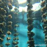 #牡蠣 #宮島水族館 #iPhone7Plus