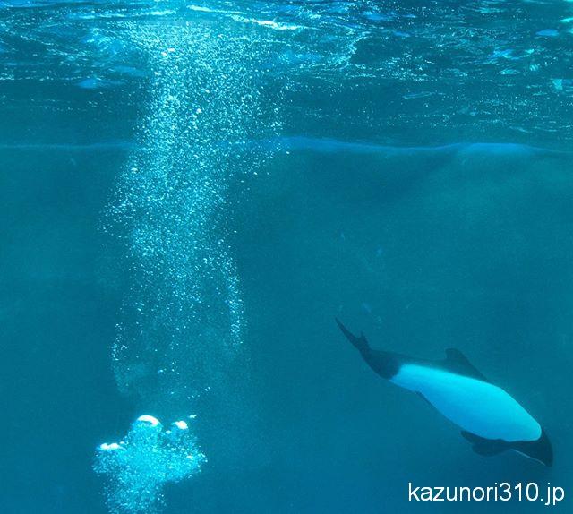 #イロワケイルカ #仙台うみの杜水族館 #iPhone7Plus