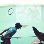 #カリフォルニアアシカ #宮島水族館 #nikonD5300 輪っかを見せずにアシカさんキャッチ