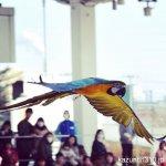 #ルリコンゴウインコ #仙台うみの杜水族館 #nikonD5300
