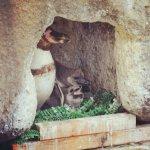 #ペンギン #雛 #仙台うみの杜水族館 #nikonD5300