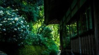 金沢の紫陽花寺・本興寺さんが見ごろです☆裏通りで渋~いのを撮ってきました