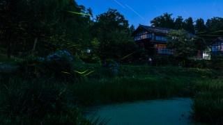 「MISIAの里山ミュージアム2017フォトコンテスト」でMISIA賞に選ばれました☆