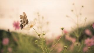 写真展とコスモスと秋の空~写真展は引き続き開催中です☆~
