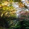 加賀の名所・山中温泉の鶴仙渓の紅葉がいい感じになっております【写真付きレポート】