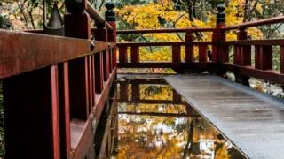 小松方面の紅葉が見ごろなのでまとめて見に行ってみた【那谷寺・苔の里・荒俣峡】