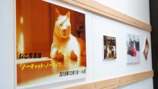 能美市のホームズマーケットさんで猫写真展が始まっています【16日まで】