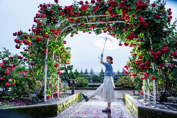 金沢南総合運動公園のバラ園