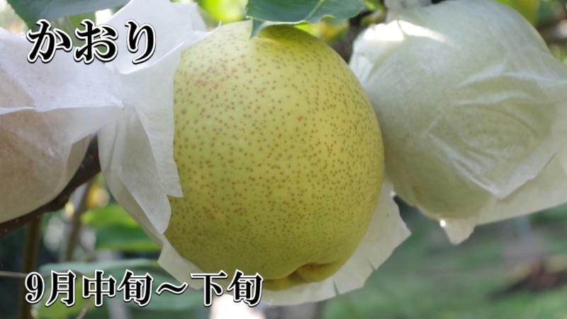 梨 かおり