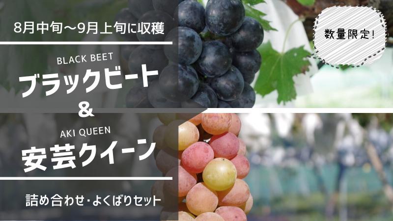 種無しブラックビート・種無し安芸クイーン セット 73