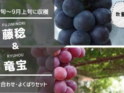 種無し藤稔・種あり竜宝 セット 35