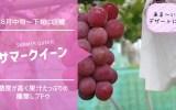 サマークイーン【種無しブドウ】 65