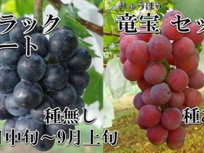 ブドウ ブラックビート 竜宝