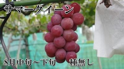 ブドウ サマークイーン 種無し