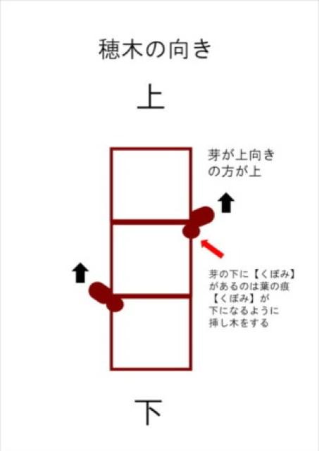 【ブドウの挿し木の方法を解説】使った道具と挿し木のポイント 38