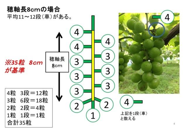 【ブドウの本摘粒】軸長は何cmが良い?軸長の長さが収穫時の房におよぼす影響とは?【画像あり】 31