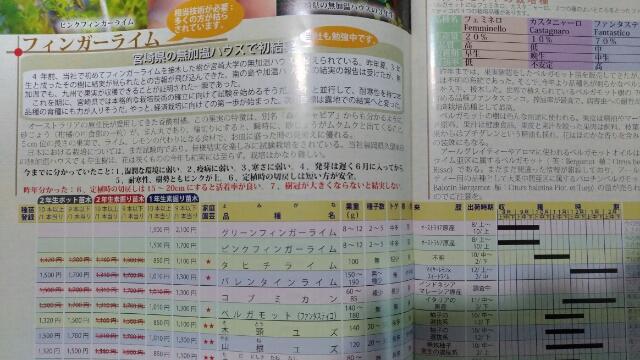フィンガーライムの栽培·育て方を解説【原産国と日本の環境を比較して分かったこと】 619
