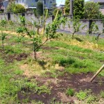 V字ジョイントの苗を定植する時のポイントと注意点を解説 28
