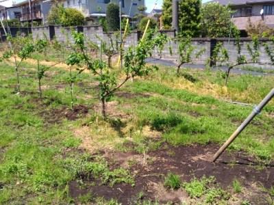 V字ジョイントの苗を定植する時のポイントと注意点を解説 32