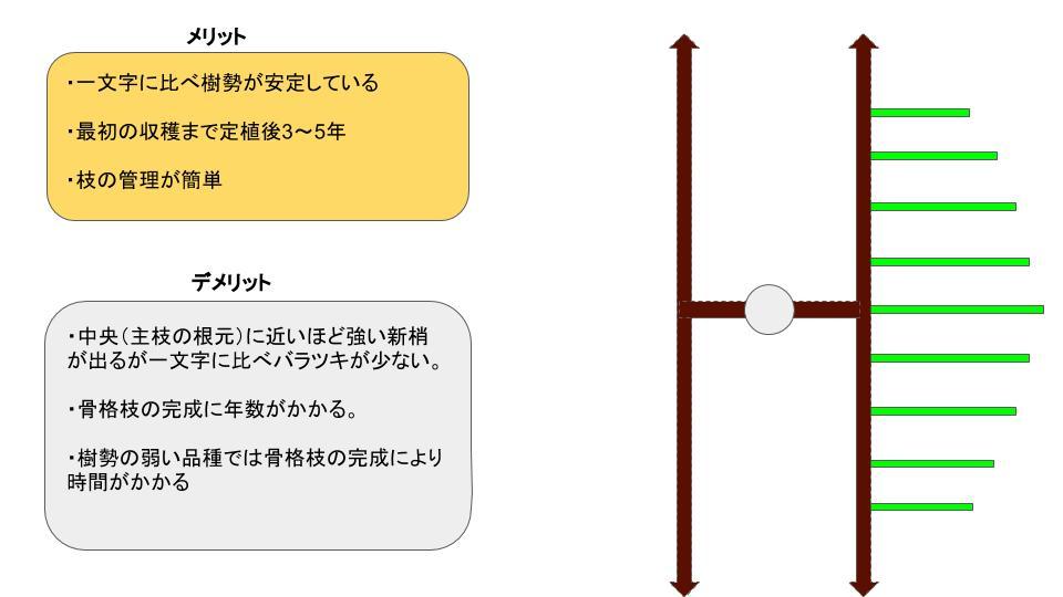 【短梢剪定の種類】各々の樹形のメリット・デメリットを解説 9