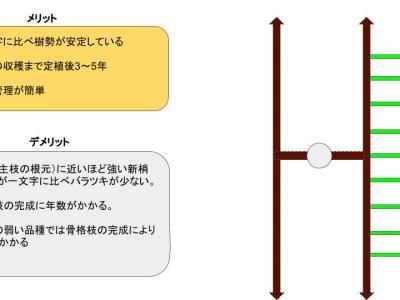 【短梢剪定の種類】各々の樹形のメリット・デメリットを解説 86