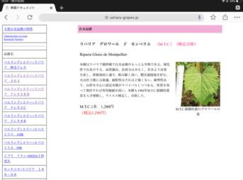 【台木の種類】ブドウの台木は畑に合わせて変える 187