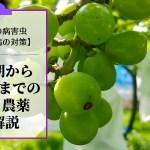 ブドウの黒とう病対策【休眠期~収穫期までの防除・農薬を解説】 277