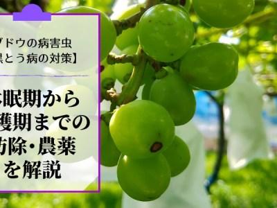 ブドウの黒とう病対策【休眠期~収穫期までの防除・農薬を解説】 34