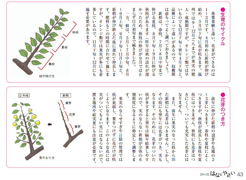 【フィンガーライムの剪定方法】3年間栽培して分かった剪定方法と時期を徹底解説 68