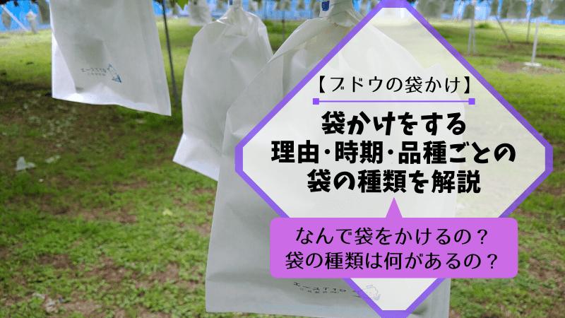 【ブドウの袋かけ】袋かけをする理由・時期・品種ごとの袋の種類を解説 367
