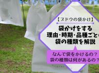 【ブドウの袋かけ】袋かけをする理由・時期・品種ごとの袋の種類を解説 642