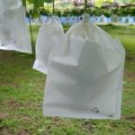 【ブドウの袋かけ】袋かけの時期·袋かけをする理由·ブドウの袋の種類を解説 34